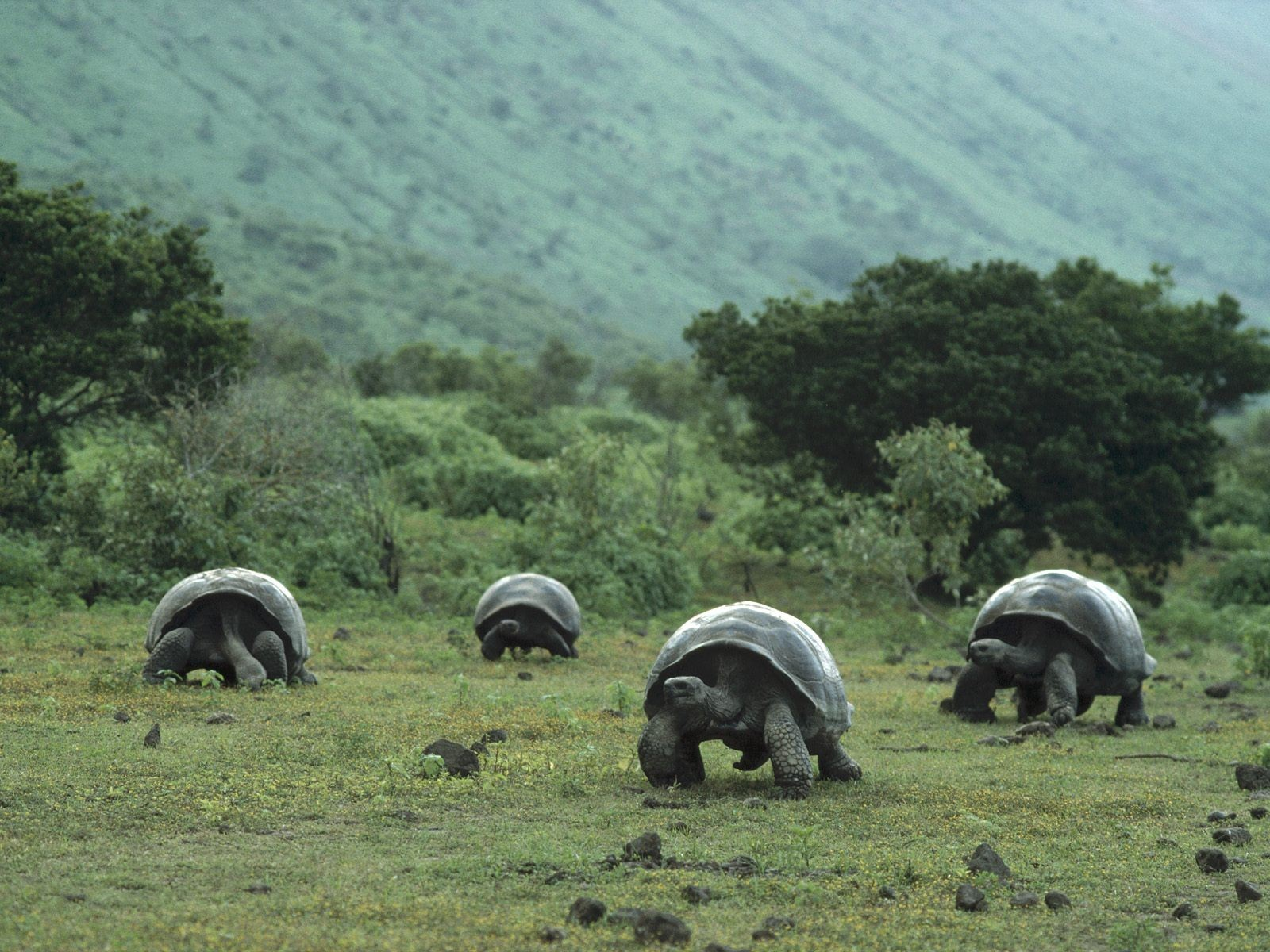 Большие черепахи нашествие обои фото
