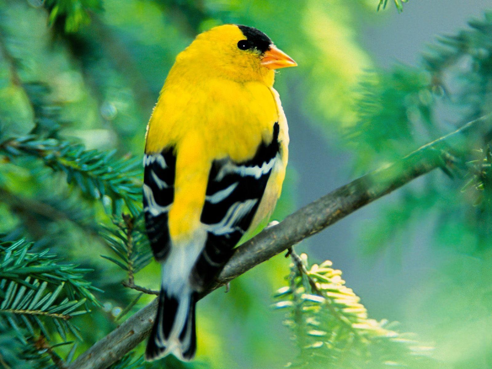 Бесплатно Скачать Птица