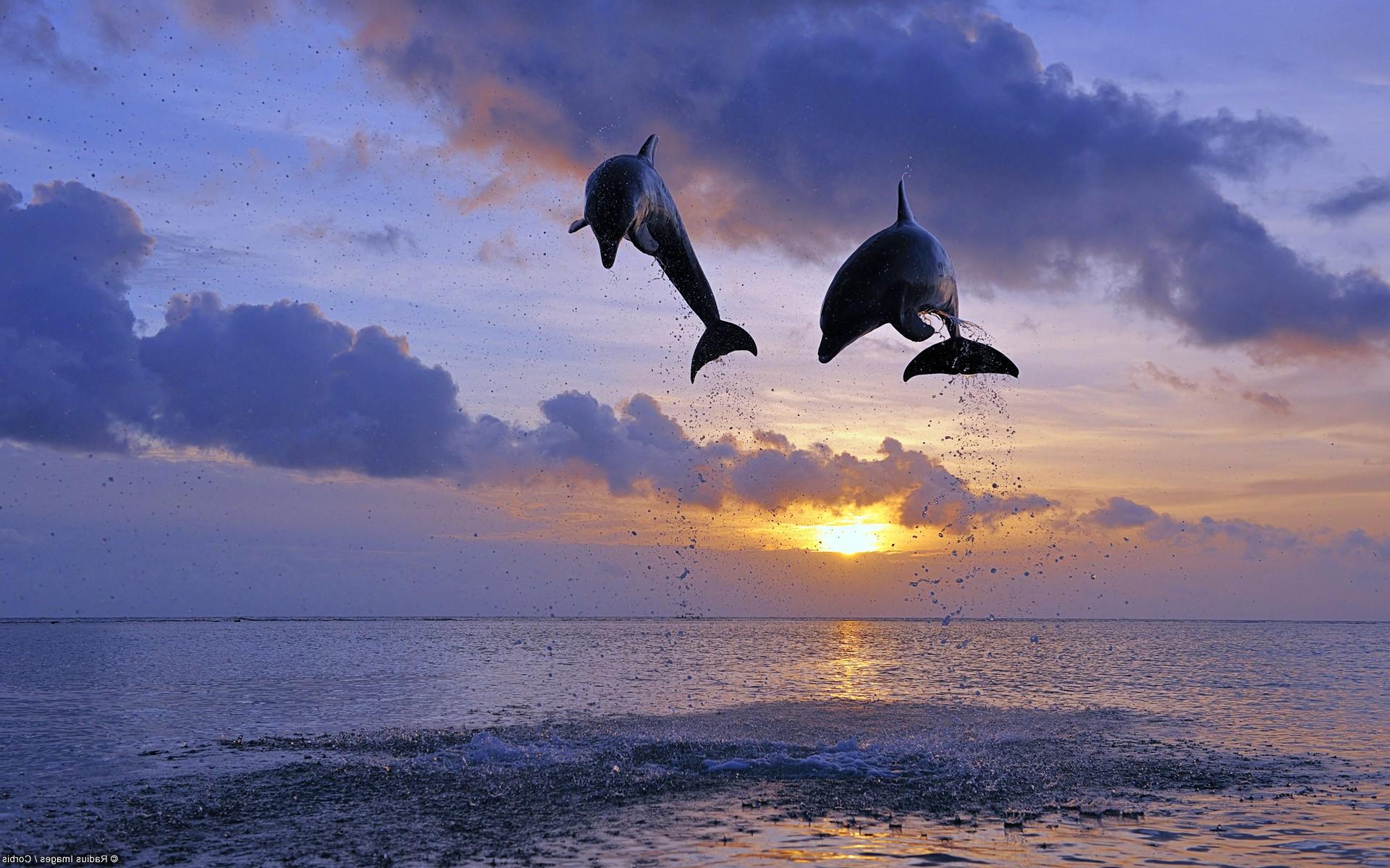 Обои для рабочего стола Рыбы и дельфины  картинки на