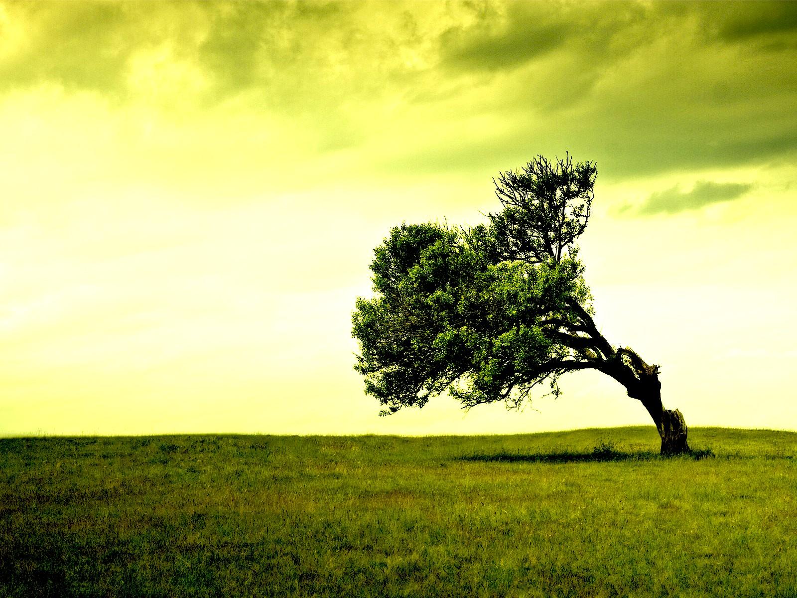 Красивое дерево на поле яркий закат