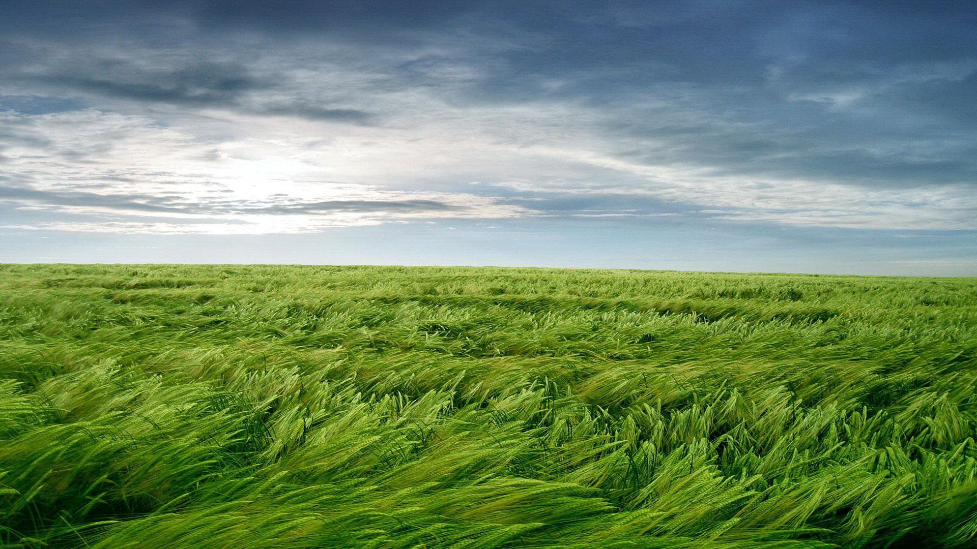 поле обои: