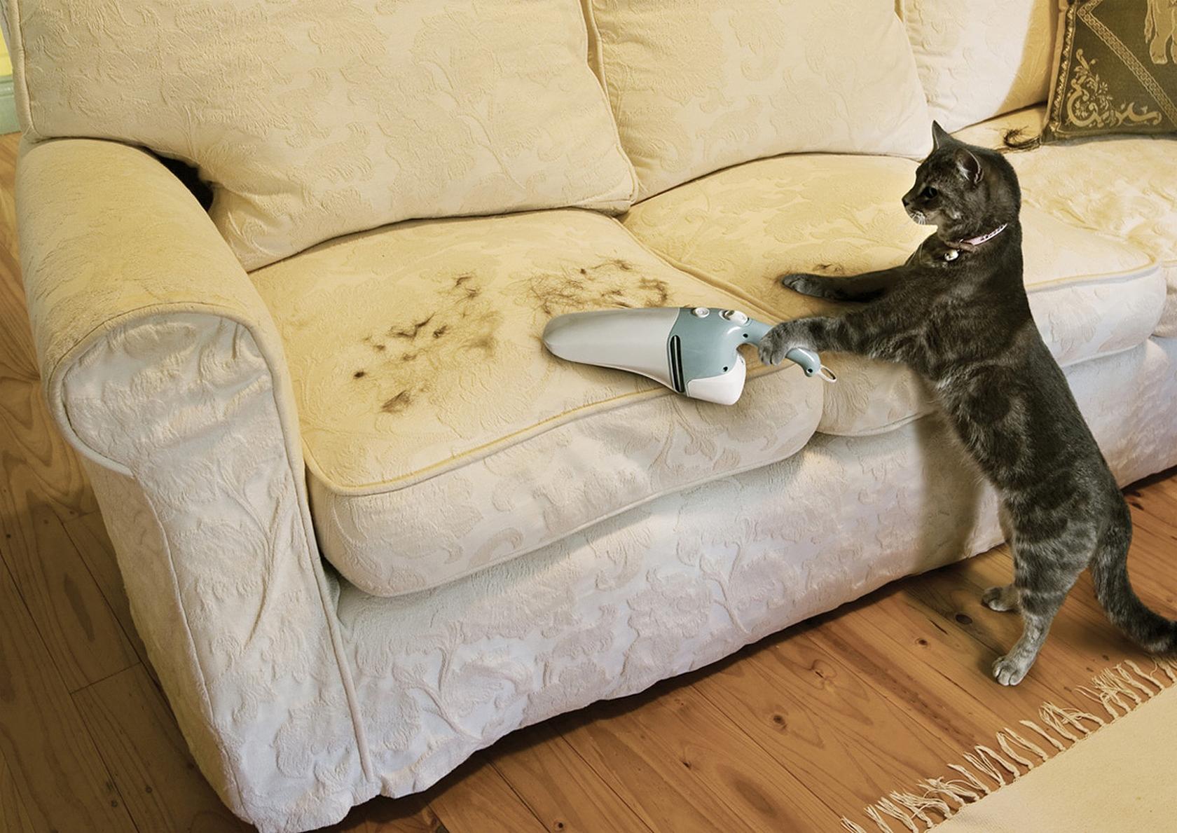 Кошка написала на ковер что делать