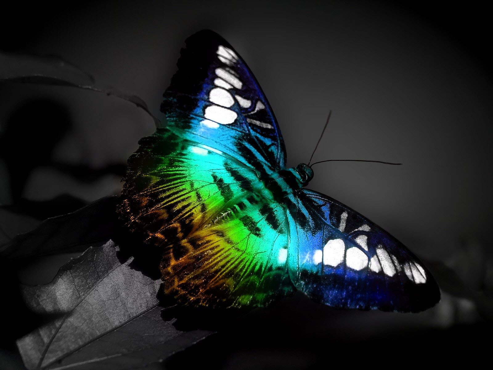 Бабочка очень красивая бабочка фото