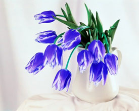 Картинки синие ирисы - 7bc50
